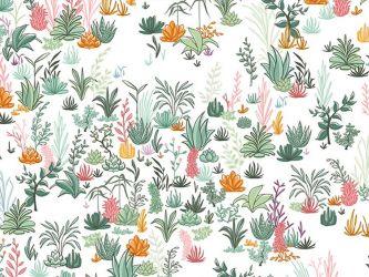 Desert Garden Webware Pflanzen