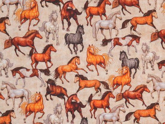 Pferde Webware Kim